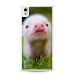 Huawei P7 etui świnka