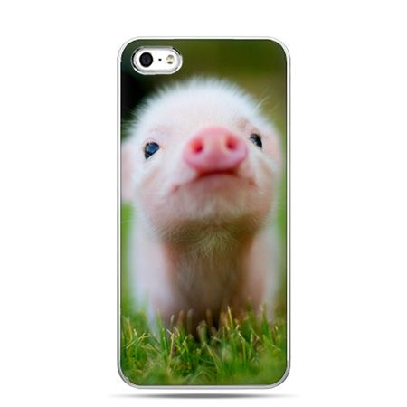 iPhone 5 , 5s etui na telefon świnka